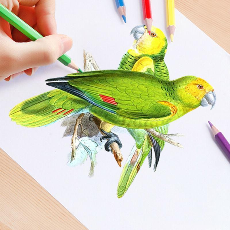 Kids/Adult Sketching
